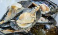 Brixham Fish Market Tours